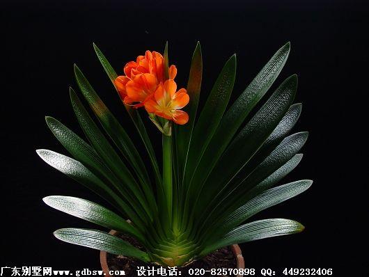 万博国际app下载万博manbetx官网网页版有毒物质室内绿色植物的吸收性
